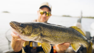 Northern Manitoba walleye