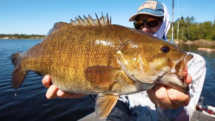 giant Manitoba smallmouth bass