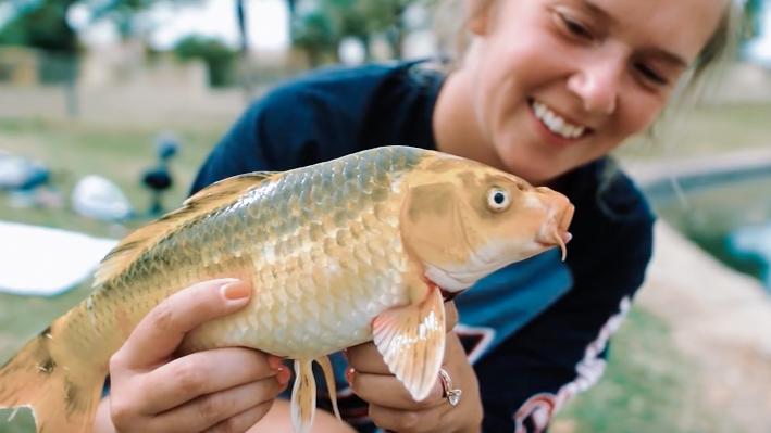 fishing for Chinese koi