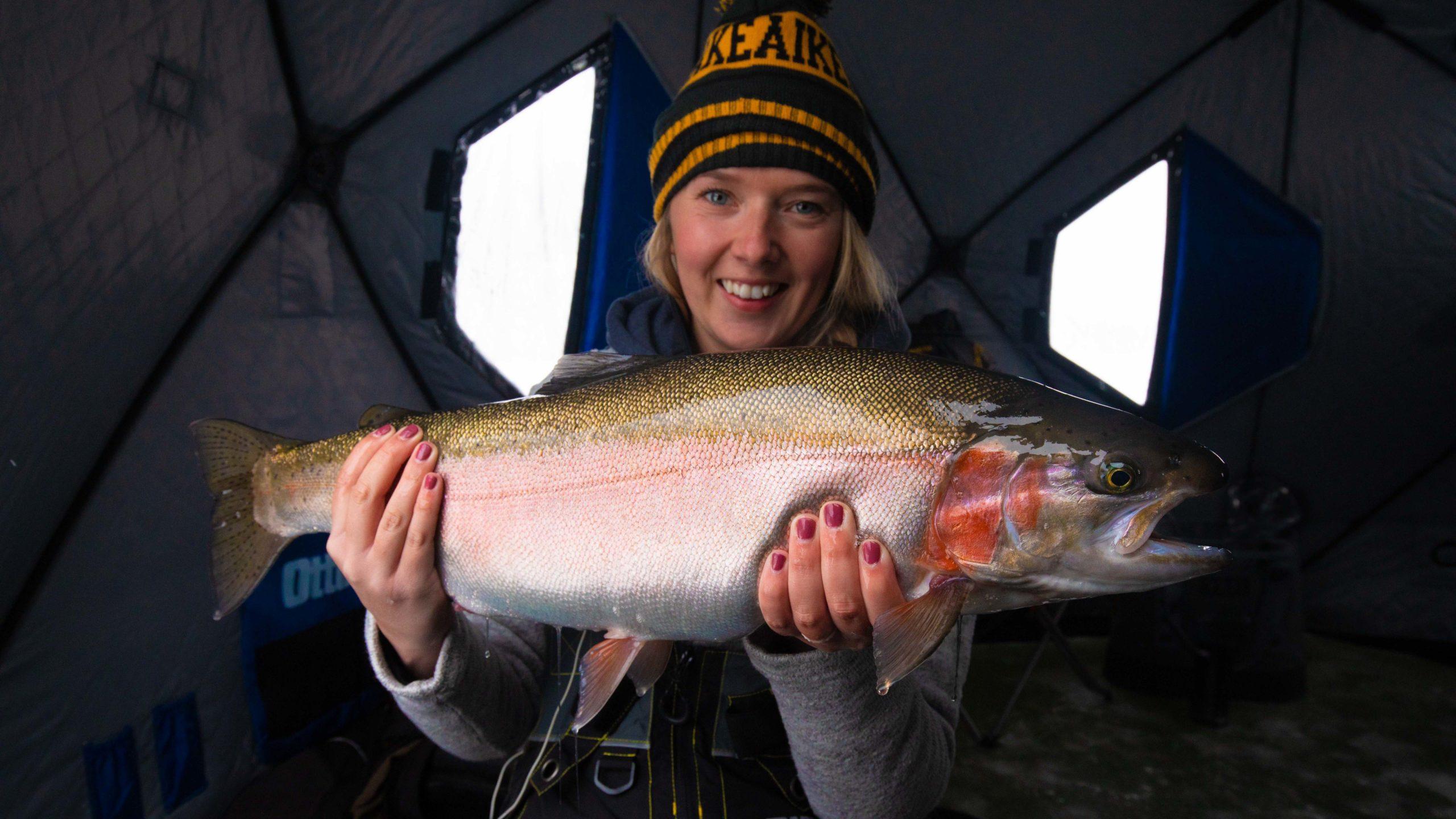 Manitoba rainbow trout